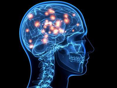 Western大学研究人员计划重新认识人类的大脑活动